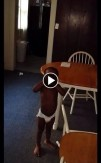 image-swearing-toddler-omaha-police-union-video