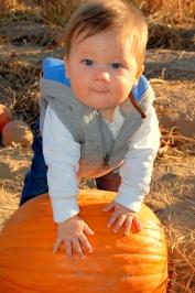 Valas Pumpkin patch gretna